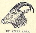Douglas Hamilton, His First Ibex...120.jpg