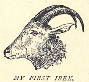 Drawings by Douglas Hamilton - His first ibex