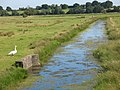 Drainage channel with swan - geograph.org.uk - 515751.jpg