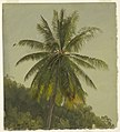 Drawing, Palm Trees, West Indies, June 1865, 1865 (CH 18200555).jpg