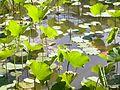 Dscn0521 japan nature.jpg