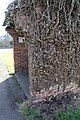 Dying Ivy on bus shelter - geograph.org.uk - 689645.jpg