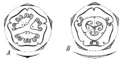 Бешеный огурец и его лечебные свойства