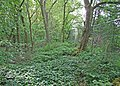 Edge of the wood - geograph.org.uk - 1326965.jpg