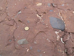 Ediacaran - Elatina Fm diamictite below Ediacaran GSSP site in the Flinders Ranges NP, South Australia. A$1 coin for scale.