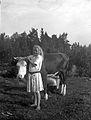 En flicka håller en ko i hornen och en kvinna mjölkar - Nordiska Museet - NMA.0057532.jpg