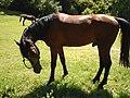 Equestrian Club - Degurić.JPG