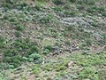 Era Majaa los Pinos - panoramio.jpg