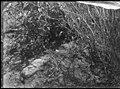 Escondido, San Diego Co., CA (aed3f66421074766a28cdbc0a430a9c4).jpg