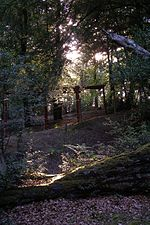 File:Evening sunlight through trees, Ferny Crofts, New Forest - geograph.org.uk - 468906.jpg