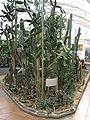 Expozice kaktusů.JPG