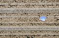 FEMA - 44373 - hail hole in fiberglass skylight.jpg