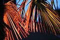 Farbig angeleuchtete Palme 001.JPG