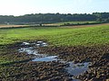 Farmland, Curridge - geograph.org.uk - 928034.jpg