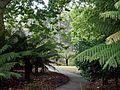 Fern Path (25519520993).jpg
