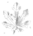 Feuille.erable.png