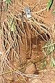 Field Trip Marottichal after Kerala Flood 2018 Soil Piping IMG 9100.jpg