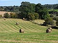 Field with baled hay, Chedworth - geograph.org.uk - 1557832.jpg