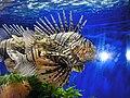 Fish in Oceanographic Museum Monaco.JPG