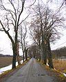 Flickr - Per Ola Wiberg ~ mostly away - Ekebyhovsallen (1).jpg