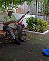 Flickr - ggallice - Banjo man, Casco Viejo.jpg