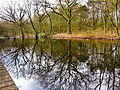 Flickr - ronsaunders47 - RISLEY REFLECTIONS. POND LIFE 3..jpg