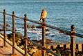 Flickr - ronsaunders47 - Seahawk Down..jpg