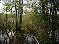 Flooded path in the Teufelsbruch swamp 14.jpg