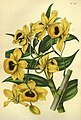 Flore des serres et des jardins de l'Europe - vol. 07 - page 725.jpg