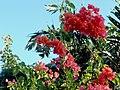 Flores - panoramio (6).jpg