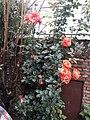 Flower20180428 085524.jpg