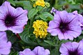 Flower (228546289).jpeg