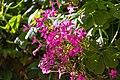 Flower (34296579363).jpg