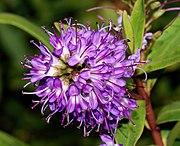 Flower 2007-2.jpg