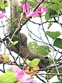 Flower Hunting (39649878945).jpg