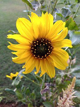 Flower at bengaluru park.jpg