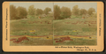 Flower beds, Washington Park, Chicago, Ill., U.S.A, by Keystone View Company.png
