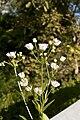 Flowers? (1).jpg