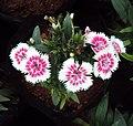 Flowers - Uncategorised Garden plants 156.JPG