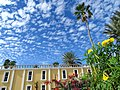 Flowers and Sky - San Jose del Cabo - Baja California Sur - Mexico - 01 (24055816311) (2).jpg