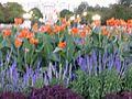 Flowers in Civic Center Denver-2.jpg