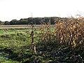 Food for gamebirds - geograph.org.uk - 1039407.jpg