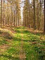 Footpath, Forest of Dean - geograph.org.uk - 384256.jpg