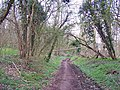 Footpath through Park Wood - geograph.org.uk - 731310.jpg