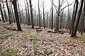 Forêt Départementale de Beauplan à Saint-Rémy-lès-Chevreuse le 21 février 2018 - 05.jpg