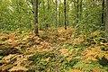 Forêt Départementale de Méridon à Chevreuse le 29 septembre 2017 - 21.jpg