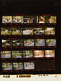 Ford A5168 NLGRF photo contact sheet (1975-06-22)(Gerald Ford Library).jpg