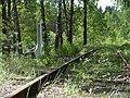 Forest, Bronnaya Gora, Belarus.jpg