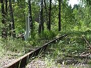 Forest, Bronnaya Gora, Belarus