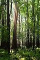Forest (8225409718).jpg